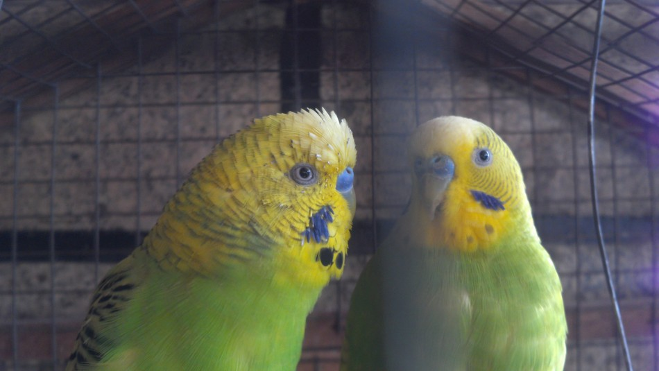 Paparazzi at the bird cage